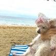 ママとビーチに♡シェ…