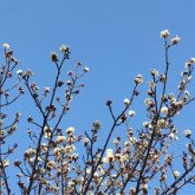 春を探しに。