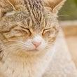 高齢ネコの尿臭に対す…