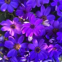 花を迎える