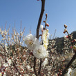 春さがし(3)
