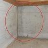 幸田町 シロアリ駆除消毒 床下がコンクリートでもシロアリは侵入してきますの画像