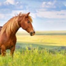千里馬は案外自分の近…