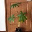 お家の中の植物の生命…