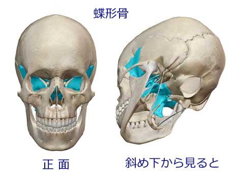 【施術】蝶形骨が奥まってるよーの記事より