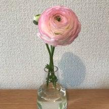 お花の変化♡