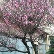 春はもうすぐ~♪