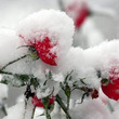 魂の雪解けもまもなく…