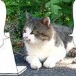 【 猫の日 という …