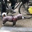 冬の犬服は綿入れがい…