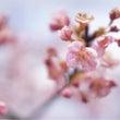 2月25日代々木で春…