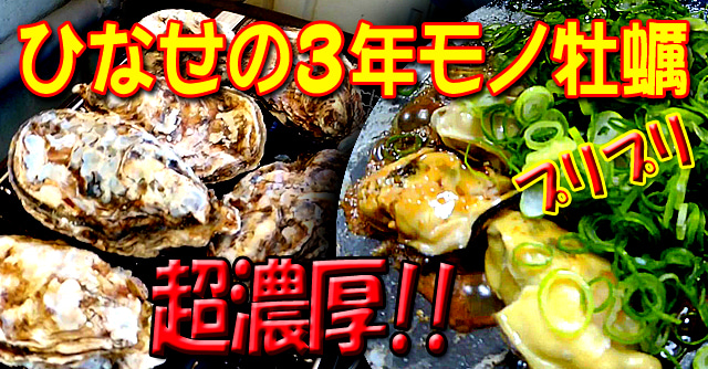 瀬戸内海、冬の味覚【3年モノの殻つき牡蠣】を買ってみた!! 岡山県日生町