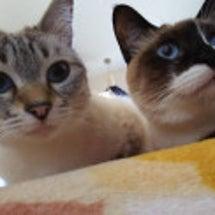 今日は猫の日❤ そし…
