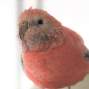 ◆222は桜ちゃんの日♪◆