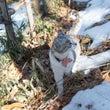 猫散歩・冬