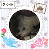 愛犬 クゥの画像