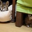 猫の世界の見守りとふ…