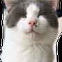 2月22日猫の日