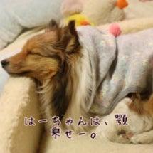 江ノ島dog-DEP…