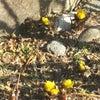 春仕様の画像