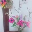 すみれ母さん✻春の花…
