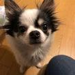【参加犬変更】3月1…