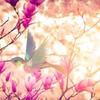 【仙台 2/25】いよいよ明後日開催☆残席あり 『九星気学 吉方どり講座』の画像