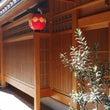 いま!祇園で注目を浴…