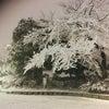雪!!の画像