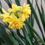 春が近づくと眠い!痒…