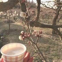 梅の香り。