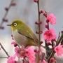 梅の花の中で・・・・…