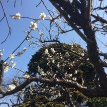 春めいてきました!!