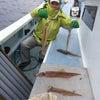 24日の釣果の画像