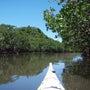 西表島の川のツアーで…