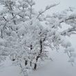 事務室の窓から雪の華