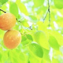 幸せが実る木 〜心を…
