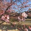 春のざわつき