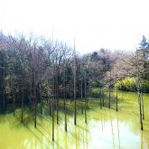 ☆緑色の池と広い公園…