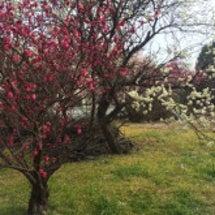 春(まだちょっと寒い…