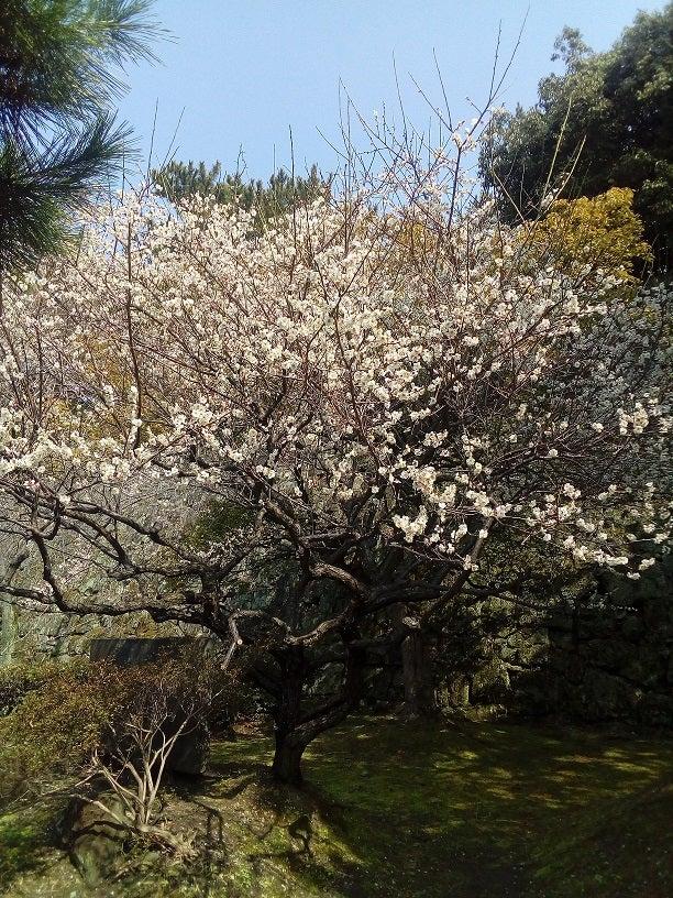 和歌山城の梅の花と勉強会