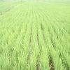 『生産緑地』の画像