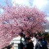 3月2日・8日 臨時休業いたします。 河津桜と小室山椿園見物。の画像