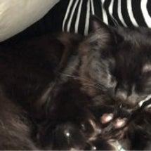 腕枕が必要な猫
