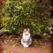 神社 猫★スリスリ♪