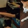 秋田犬はやちゃん、超オススメ!第4回『ドッグスキャン』体験イベントのご案内♪の画像