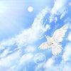 【トランスフォーム】ハエからハト モヤモヤから感謝への画像