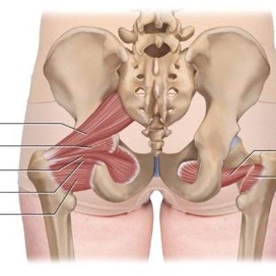 ♡乙女の美脚解剖学①外旋六筋の記事に添付されている画像