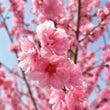 啓蟄の季節を食す。春…