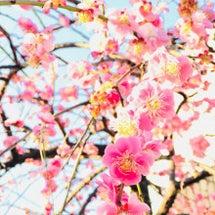 春の訪れとともに。。…